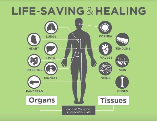 organ-donation-Image-1-1.png